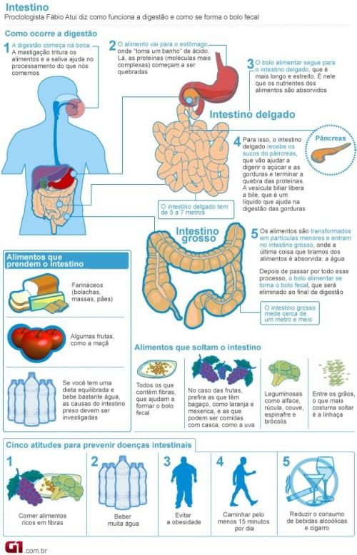 620x965-intestino
