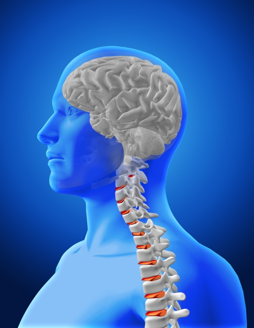 3D medical image showing spine and brain in male figure