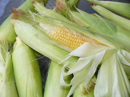 Pixabay Milho corn-776559_1920